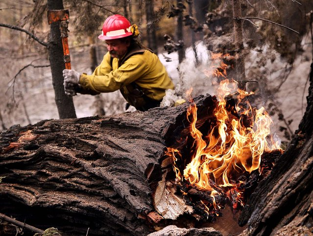 Tracy Porter, of Paradise, Calif., uses an axe to fragment a burning tree damaged by the Eiler Fire on Monday, August 4, 2014, in the Lassen National Park near Hat Creek, Calif. Firefighters were focusing on two wildfires near each other in Northern California that have burned through more than 100 square miles of terrain. (Photo by Marcio Jose Sanchez/AP Photo)