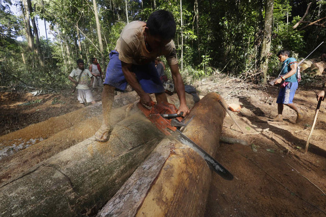 A Ka'apor Indian warrior uses a chainsaw to ruin one of the logs they found during a jungle expedition to search for and expel loggers from the Alto Turiacu Indian territory, near the Centro do Guilherme municipality in the northeast of Maranhao state in the Amazon basin, August 7, 2014. (Photo by Lunae Parracho/Reuters)