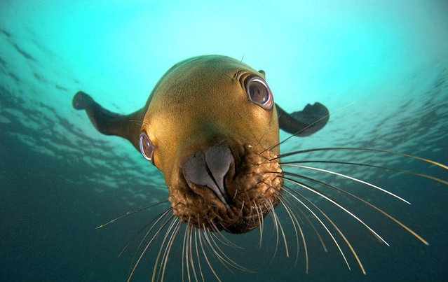 Cute little sea lions by Jon Cornforth