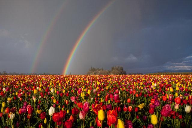 Double the color... (Jesse Estes)