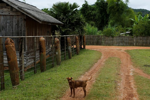 A fence made of bombs dropped by the U.S. Air Force planes during the Vietnam War, is seen in the village of Ban Napia in Xieng Khouang province, Laos September 3, 2016. (Photo by Jorge Silva/Reuters)