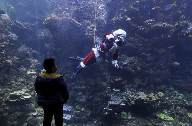 Diver George Bell, dressed as Santa Claus, swims in the Philippine coral reef tank during a presentation on fish and corals as part of the Tis the Season for Science holiday exhibit at the California Academy of Sciences in San Francisco, Tuesday, December 19, 2017. (Photo by Jeff Chiu/AP Photo)