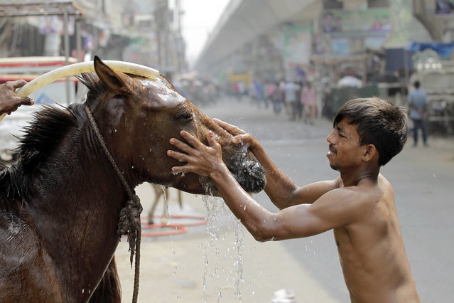 A Bangladeshi man bathes his horse on a roadside early morning in Dhaka, Bangladesh, Friday, October 2, 2015. (Photo by A. M. Ahad/AP Photo)