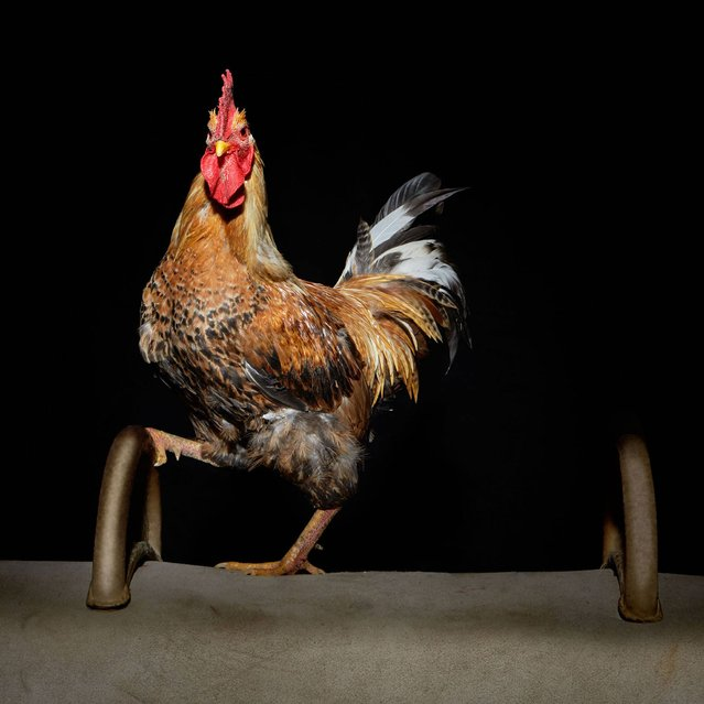 """Nice Pecks"" calendar: Gymnastics. (Photo by The happy egg co.)"