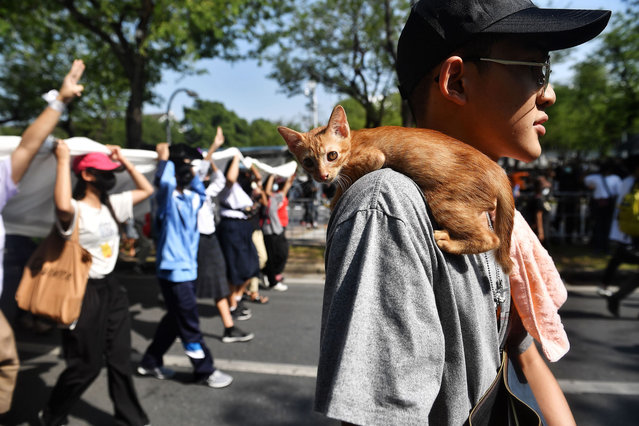 A cat sits on the shoulder of a pro-democracy protester taking part in an anti-government rally in Bangkok on November 14, 2020. (Photo by Lillian Suwanrumpha/AFP Photo)