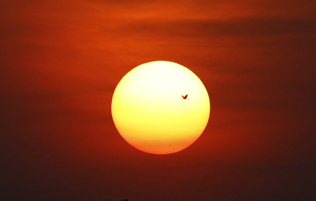 A stork flies back to its nest during sunset in Nakhonsawan province, 270 km (167 miles) north of Bangkok December 23, 2014. (Photo by Chaiwat Subprasom/Reuters)