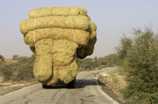 An overloaded truck carries bales of rice stalks near Rosso, as it heads for the capital Nouakchott, January 30, 2008. (Photo by Normand Blouin/Reuters)