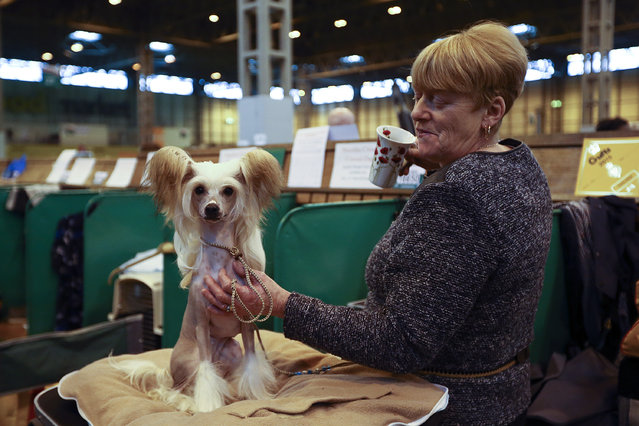 An owner holds her Chinese Crested dog on the fourth and final day of Crufts dog show at the National Exhibition Centre on March 8, 2015 in Birmingham, England.  First held in 1891, Crufts is said to be the largest show of its kind in the world. The annual four-day event, features thousands of dogs, with competitors travelling from countries across the globe to take part and vie for the coveted title of 'Best in Show'. (Carl Court/Getty Images)