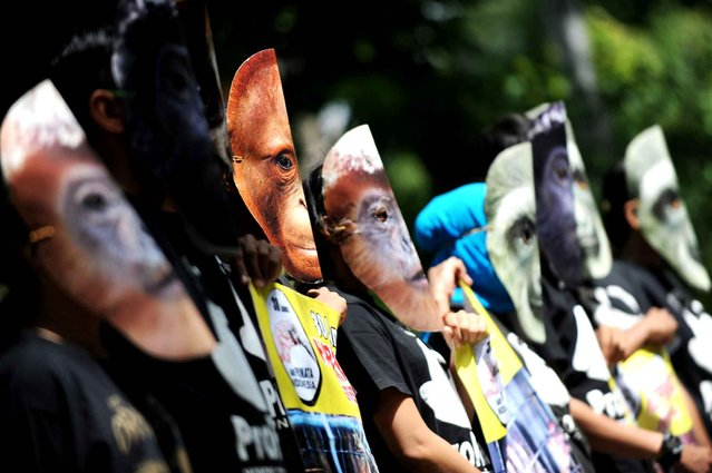 Indonesian activists from ProFauna displays banners during a demontration in Denpasar on Bali island on January 30, 2014. The activists were protesting the illegal primates trade in Indonesia. (Photo by Sonny Tumbelaka/AFP Photo)