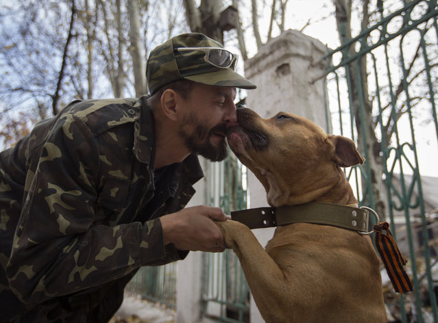 A pro-Russian rebel guarding a school plays with his dog, which he nicknamed Rex-separatist in reference to the pro-Russian separatist movement, in Donetsk, eastern Ukraine, October 16, 2014. The dog is wearing an orange ribbon of St. George, a symbol widely associated with pro-Russian protests in Ukraine. (Photo by Shamil Zhumatov/Reuters)