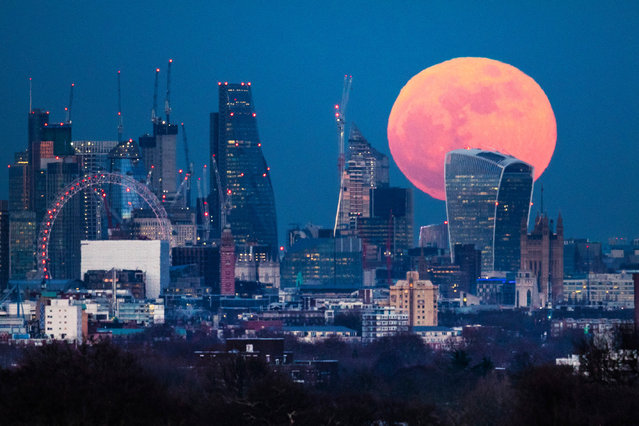"""A blue """"supermoon"""" rises behind 20 Fenchurch Street, known as the Walkie-Talkie, in central London, January 2018. Two full moons in the same calendar month are also known as a blue moon. (Photo by Peter Macdiarmid/LNP)"""