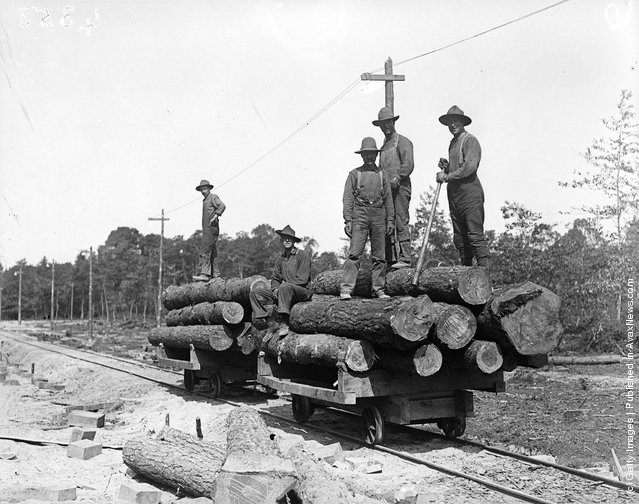 1916: The Canadian Forestry Battalion loading logs at Virginia Water, Surrey during World War I