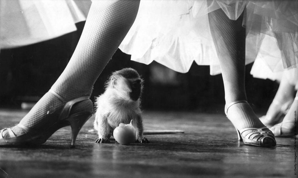 Animal Baby. Part IV