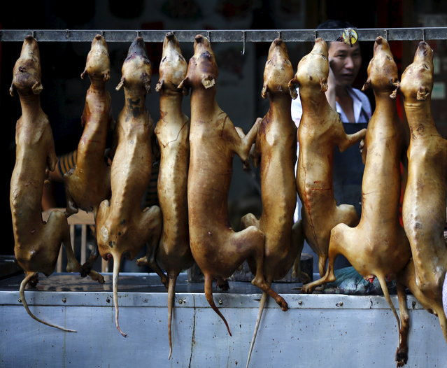 Butchered dogs are displayed at a vendor's stall at a dog meat market in Yulin, Guangxi Autonomous Region, June 21, 2015. (Photo by Kim Kyung-Hoon/Reuters)