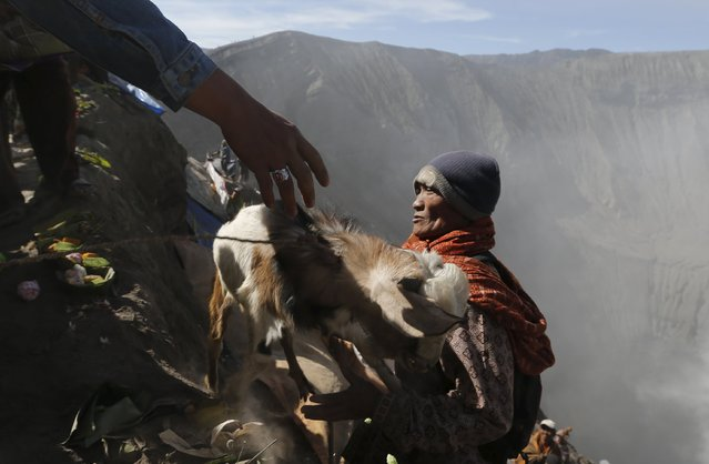 A villager hands a goat to another after managing to catch it from a Hidu worshipper, who attempted to throw it into the crater as an offering, at Mount Bromo during the Kasada Festival in Probolinggo, Indonesia's East Java province, August 1, 2015. (Photo by Reuters/Beawiharta)