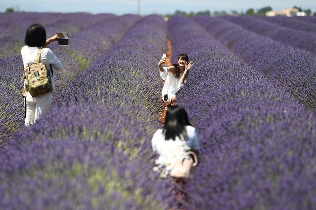 Chinese tourists make selfies in a lavender field in Valensole, southern France, on June 18, 2017. (Photo by Boris Horvat/AFP Photo)