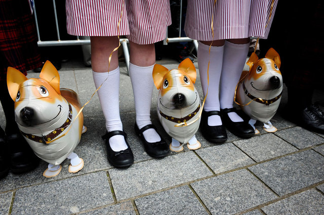 School children wait with inflatable corgie dogs prior the arrival of Queen Elizabeth II for a visit to Exeter, England on May 2, 2012