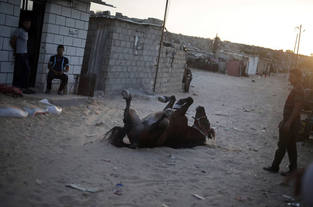 In this Monday, June 20, 2016 photo, Palestinians watch a horse roll in sand in el-Zohor slum, on the outskirts of Khan Younis refugee camp, southern Gaza Strip. (Photo by Khalil Hamra/AP Photo)