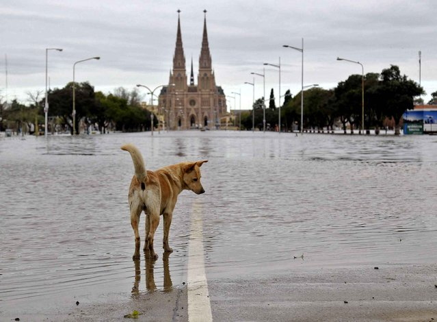 Picture released by Noticias Argentina of a flooded area by the Basilica of Our Lady of Lujan in Buenos Aires province, Argentina on August 12, 2015. 1300 people remain evacuated in the humid pampas of Argentina after several days of rains with overflowing of rivers which left three people killed. (Photo by Daniel Vides/AFP Photo/NA)
