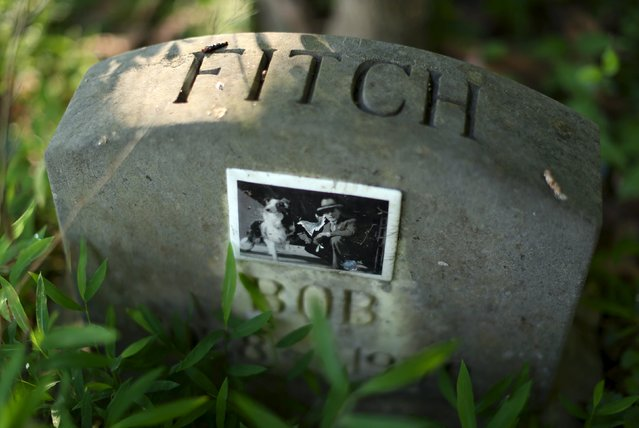 """A dog's headstone, with a tile photo of """"Bob"""" and his owner, is seen in an overgrown section of the Aspin Hill Memorial Park in Aspen Hill, Maryland July 22, 2015. Established in 1921, Aspin Hill contains the graves of more than 50,000 animals, from movies stars to WWI heroes to the dogs of former FBI Director J. Edgar Hoover. National Dog Day is celebrated in the United States on August 26. (Photo by Gary Cameron/Reuters)"""
