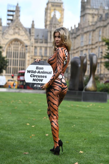 Joanna Krupa attends a PETA photocall painted as a tiger to campaign for a ban on Animal Circuses at Westminster on September 11, 2017 in London, England. (Photo by James Gourley/Rex Features/Shutterstock)