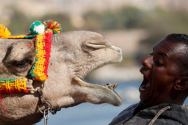 "Hossam Nasser, 32, plays with his camel  ""Anter"" in front of his house in the Nubian village of Gharb Soheil, on the west bank of the Nile river in Aswan, Egypt on February 19, 2020. (Photo by Amr Abdallah Dalsh/Reuters)"