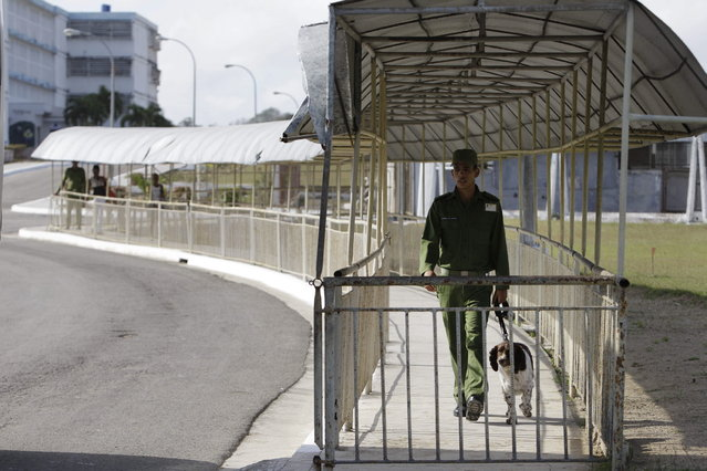 A military guard walks with a dog at the Combinado del Este prison, during a media tour of the prison in Havana, Cuba, Tuesday, April 9, 2013.  Cuban authorities led foreign journalists through the maximum security prison, the largest in the Caribbean country that houses 3,000 prisoners. Cuba says they have 200 prisons across the country, including five that are maximum security. (Photo by Franklin Reyes/AP Photo)