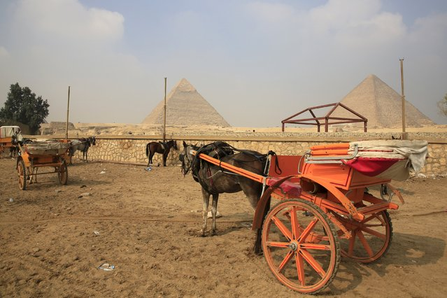 Horse carts are parked as they wait for tourists in front of the Giza Pyramids on the outskirts of Cairo, Egypt, November 8, 2015. (Photo by Amr Abdallah Dalsh/Reuters)