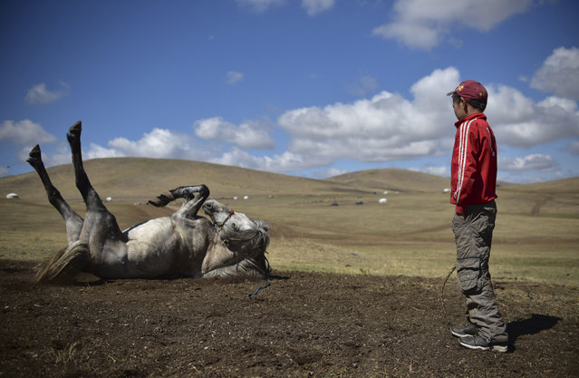 This picture taken on July 8, 2015 shows 13-year-old jockey Purevsurengiin Togtokhsuren (R) watching a horse rolling in the dirt after a training session in Khui Doloon Khudag, some 50 kms west of Ulan Bator. Despite being only 13 years old, Togtokhsuren is riding for the fifth time in the national races for Mongolia's summer festival, known as Naadam, lining up against some 170 other child jockeys. (Photo by Johannes Eisele/AFP Photo)