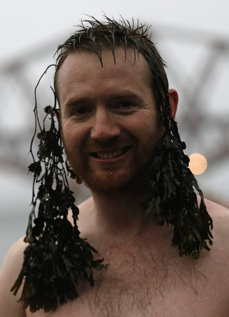 A swimmer comes out of the water with seaweed attached to his head as he participates in the New Year's Day Loony Dook swim at South Queensferry, Scotland January 1, 2015. (Photo by Russell Cheyne/Reuters)