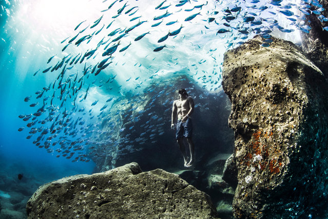 Andre Fajardo free diving early one summer morning, Hawaiian Islands. Gold prize winner in the human and nature category. (Photo by Christa Funk/World Nature Photography Awards)