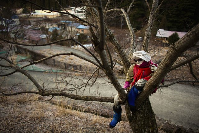 A scarecrow sits on a tree in the mountain village of Nagoro on Shikoku Island in southern Japan February 24, 2015. (Photo by Thomas Peter/Reuters)