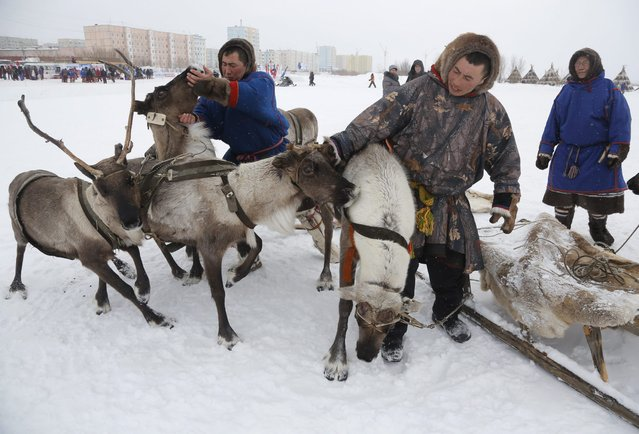In this photo taken on Sunday, March 15, 2015, Nenets men prepare for reindeer races at the Reindeer Herder's Day holiday in the city of Nadym, in Yamal-Nenets Region, 2500 kilometers (about 1553 miles) northeast of Moscow, Russia. (Photo by Dmitry Lovetsky/AP Photo)