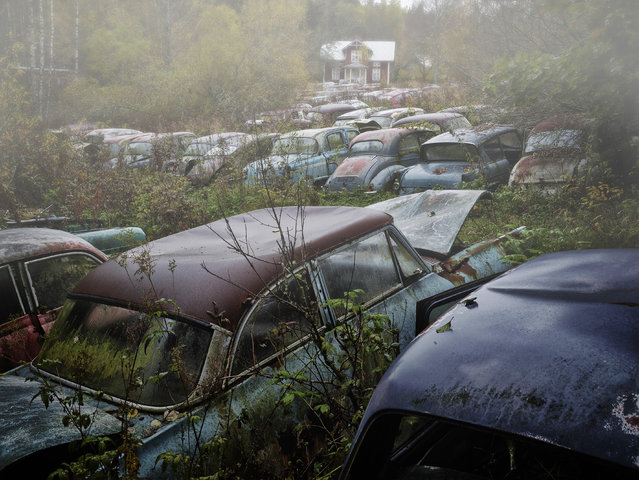 Part of the sculpture park which contains 50 cars, 2012, Sweden. (Photo by Dieter Klein/Barcroft Media)