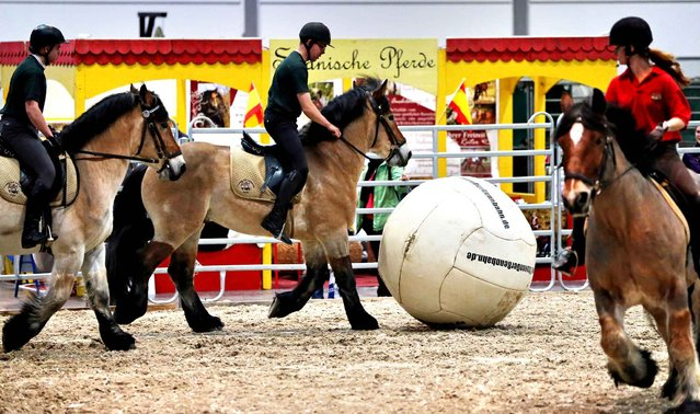 Draft horses play horse soccer at the horse show Partner Pferd in Leipzig, Germany, 16 January 2014. Around 25 exhibitors from seven countries are presenting their products for horses until 19 January 2014. The expo also features a program of shows and world cup tournaments in show jumption, equestrian vaulting and four-in-hand drivers. (Photo by Jan Woitas/AFP Photo)