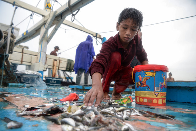 In this photo taken on March 16, 2019, 13-year-old Reymark Cavesirano collects left over herring onboard a fishing boat anchored at the mouth of Manila Bay off Navotas City in suburban Manila. (Photo by Ted Aljibe/AFP Photo)