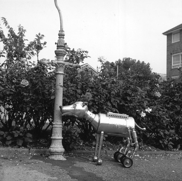 Arfur, the tin dog created by Steve Brooks of east London, approaches a lamppost, March 1981.  Brooks spent nine months and almost £2,000 creating his unusual pet. (Photo by Stanley Lewis/BIPs/Getty Images)