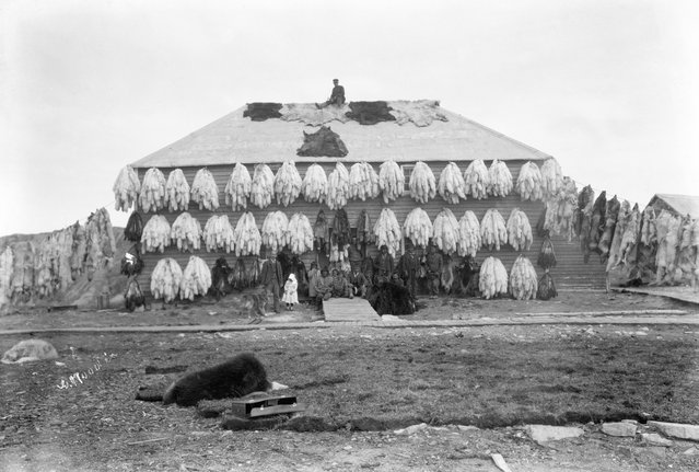 The family returned to Canada to farm in Manitoba, before John began working with the North-West Mounted Police (aka the Mounties). Here: Hudson Bay Company store covered with furs, Churchill, Manitoba, circa 1906-09. (Photo by Geraldine Moodie/The Guardian)