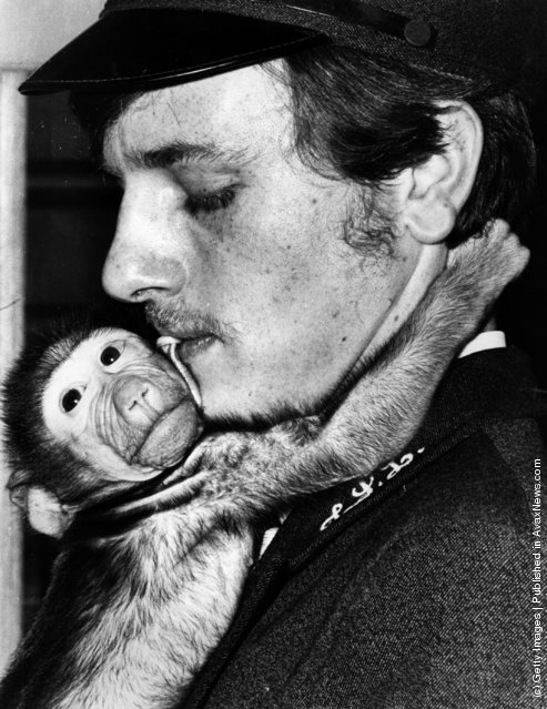 23rd June 1971:  Ripple, a baby baboon born at London zoo on 7th May, 1971, with a keeper