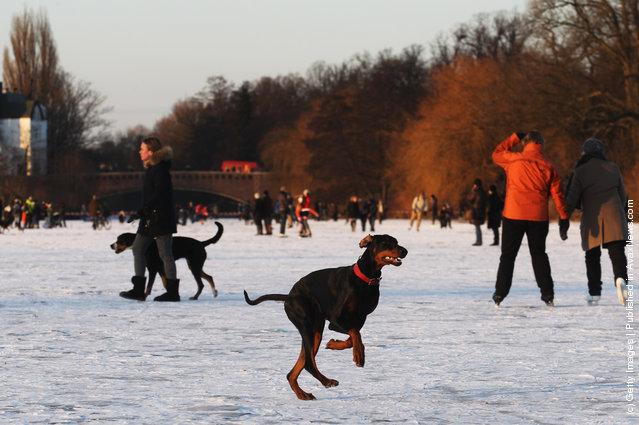 A dog runs on the frozen Aussenalster river during the 'Alstervergnuegen' on February