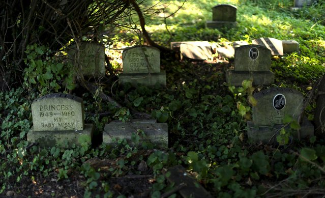 Dog headstones are seen in an overgrown section of the Aspin Hill Memorial Park in Aspen Hill, Maryland July 22, 2015. (Photo by Gary Cameron/Reuters)