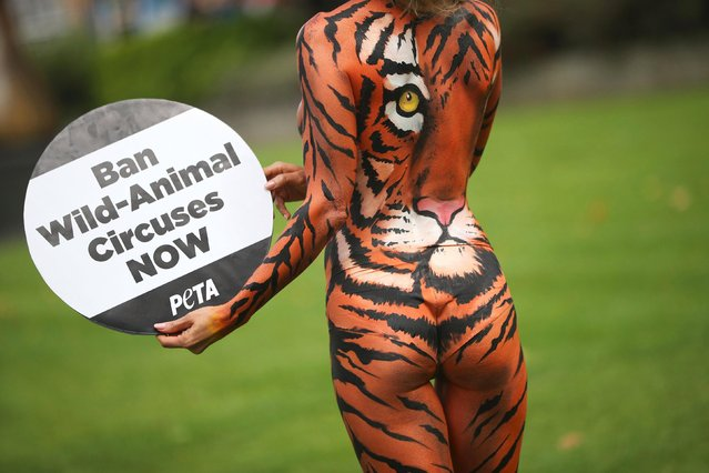 Model Joanna Krupa poses during a protest against animals in circuses, in front of the Houses of Parliament in London, Britain, September 11, 2017. (Photo by Hannah McKay/Reuters)