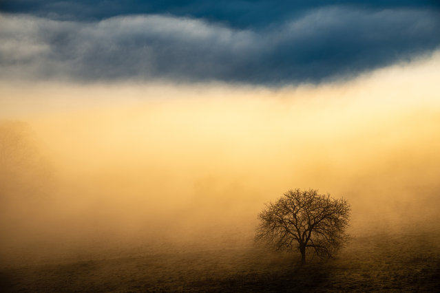 Winner, Landscapes. Benjain Waldmann – Magic Light. Tree in the mist at the Albtrauf. (Photo by Benjamin Waldmann/2020 GDT Nature Photographer of the Year)