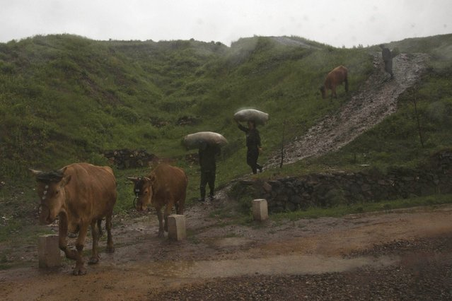 In this June 16, 2014 photo, farmers walk in a rainstorm with their cattle near the town of Hyesan, North Korea in Ryanggang province. (Photo by David Guttenfelder/AP Photo)
