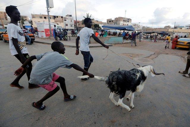 People play with an animal ahead of the Muslim festival of sacrifice Eid al-Adha in Dakar, Senegal on July 30, 2020. (Photo by Zohra Bensemra/Reuters)
