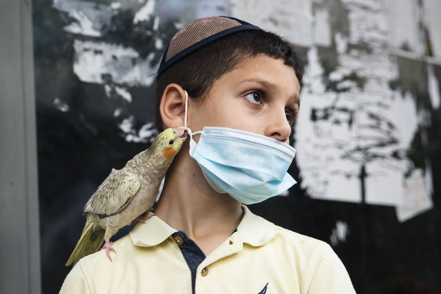 Shmuel Ben Sason wears a protective face mask as his parrot Shuki sits on his shoulder on September 17, 2020 in Bnei Brak, Israel. As the country grapples with a surge in Covid-19 cases it has imposed a three-week lockdown that coincides with Rosh Hashanah, the Jewish new year, and Yom Kippur, the Day of Atonement. (Photo by Amir Levy/Getty Images)