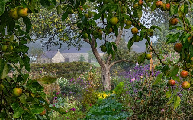 The International Garden Photographer of the Year is one of the world's premier competitions specialising in botanical photography. There are 11 main categories and numerous special awards including Young Garden Photographer of the Year, and the mobile-only category Gardens on the Go. It is run in association with the Royal Botanic Gardens, Kew, where the winning pictures will be exhibited, followed by a rolling programme of touring exhibitions in the UK and abroad. Here: Winner, The Bountiful Earth category. Aberglasney Gardens, Carmarthenshire, Wales. (Photo by Nigel McCall/The Guardian)