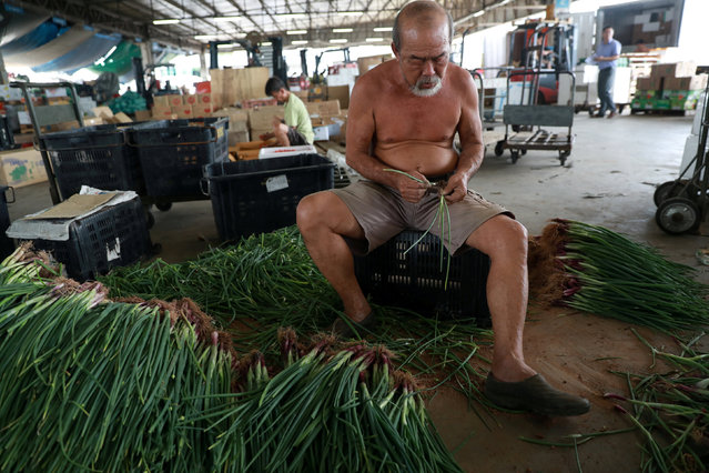 A man prepares vegetables at a market in Singapore January 29, 2018. (Photo by Soe Zeya Tun/Reuters)