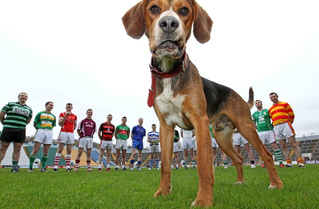 Pictured a four legged visitor wants in on the photoshoot, with the Senior players, at the Launch of the 2013 Cork County Football Championship, at Pairc Ui Chaoimh, Cork, on April 24, 2013. (Photo by Jim Coughlan)