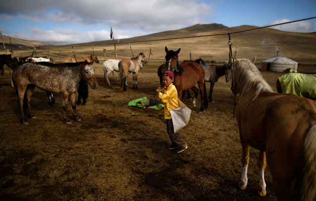 This picture taken on July 8, 2015 shows 13-year-old jockey Purevsurengiin Togtokhsuren (C) taking care of the horses in Khui Doloon Khudag, some 50 kms west of Ulan Bator. (Photo by Johannes Eisele/AFP Photo)
